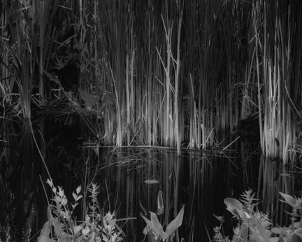 underhill-water-reeds