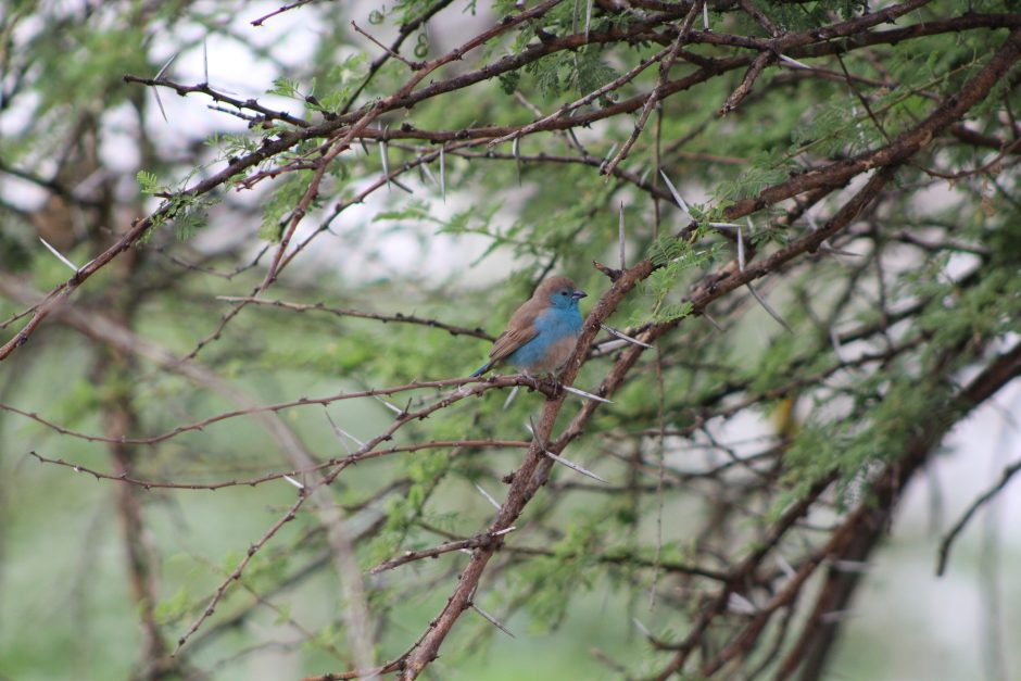"""A Blue Finch""— Short Fiction of Ana Vidosavljevic"