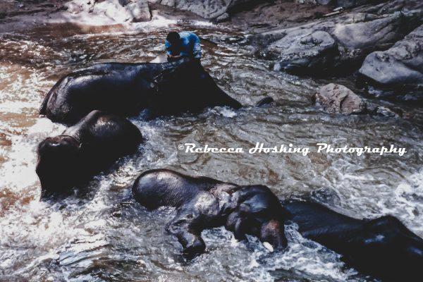 Rebecca Hosking — Multitalented Creative